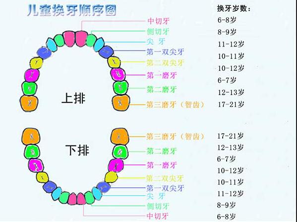 儿童换牙顺序图