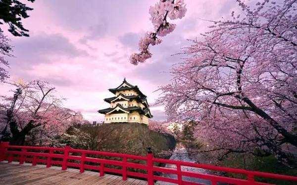 为什么日本是世界最长寿的国家